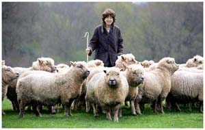 Lady egremont and the Pedigree Sussex sheep at Petworth